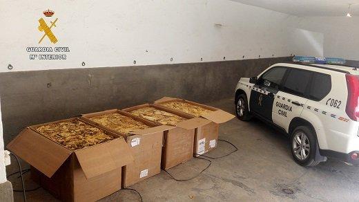Guardia Civil aprehende 500 kilos de hojas de tabaco