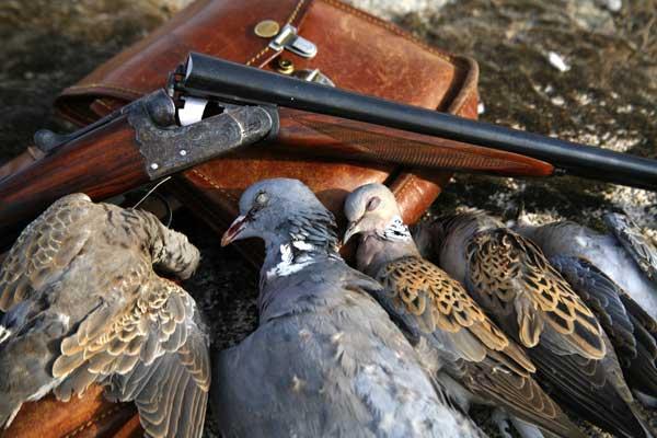 caza-palomas