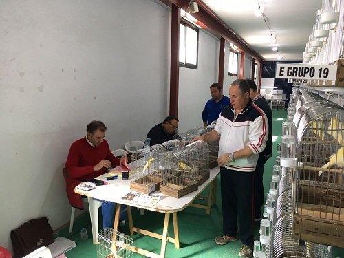 concurso-canaricultura-2