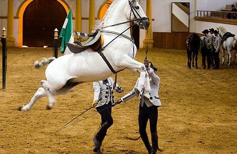 26-caballos-21-jinetes-real-escuela-andaluza-arte-ecuestre-pozoblanco