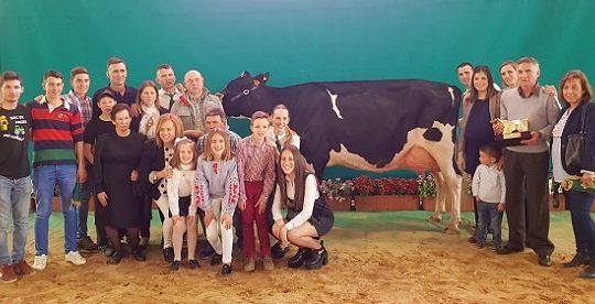 vaca-gran-campeona-concurso-frisona-ganaderia-el-cruce