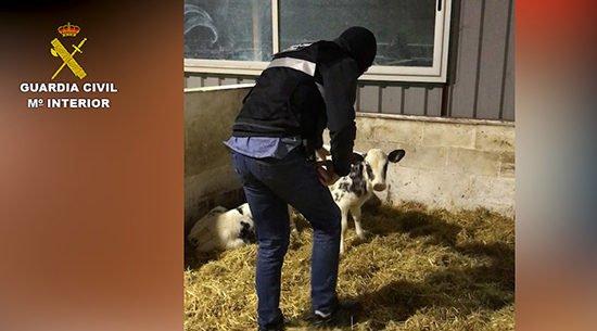 ganaderos-los-pedroches-implicados-trama-ilegal