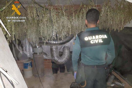 desmantela-plantacion-marihuana-villanueva-cordoba