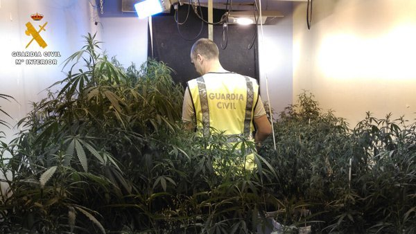 detenidos-plantacion-marihuana