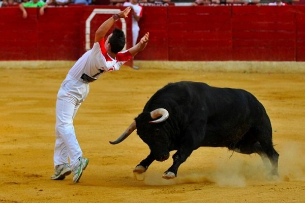 mejores-recortadores-espana-concurso-exhibicion-anora