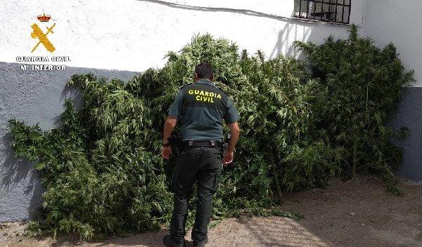 plantacion-de-marihuana-espiel