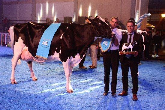 vaca-campeona-anora-novilla-dos-torres-2