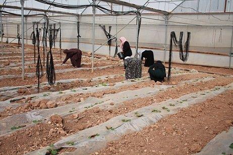 el-ayuntamiento-pozoblanco-colabora-palestino