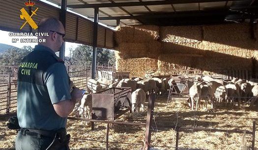 tres-detenidos-robar-corderos