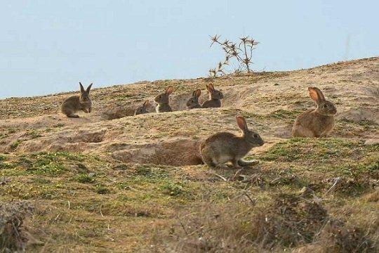 vva-duque-declarada-emergencia-danos-conejos