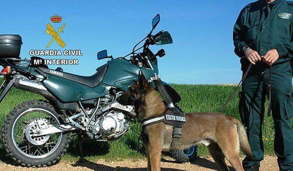 perros-guardia-civil-localizan-desaparecida-villanueva-del-rey