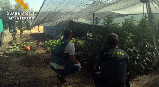 detenido-vecino-villanueva-cordoba-cultivo-drogas
