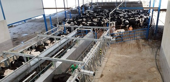 agricultura-ayudas-ovino-caprino-vacuno