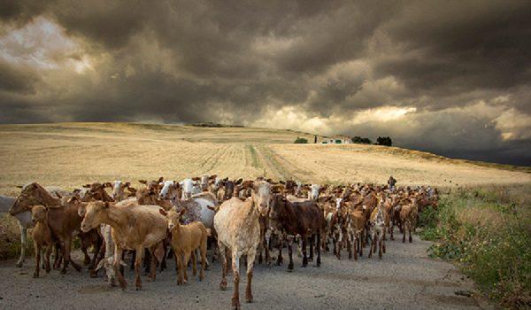 fotografia-premiada-concurso-medio-rural-andalucia-2019