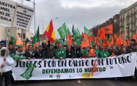 mociones-pp-pozoblanco-sector-agroganadero-y-devolucionl-iva