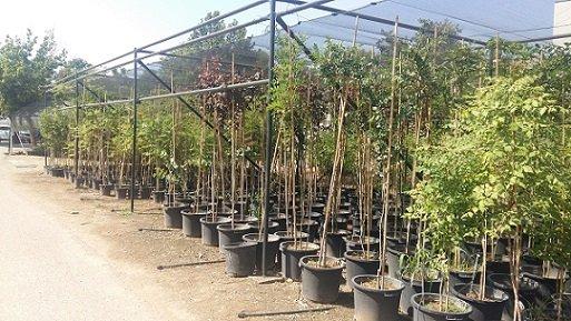 centro-agropecuario-40000-plantas-municipios-cordobeses