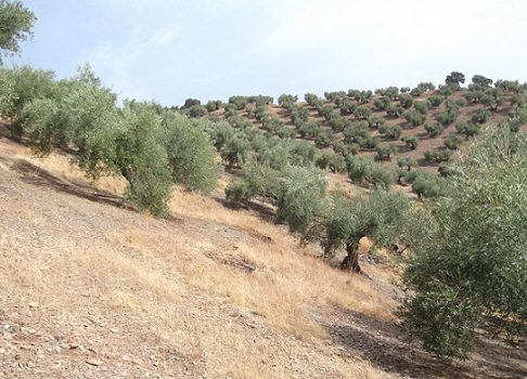 altas-temperaturas-ausencia-lluvias-perjudican-cultivos-invierno