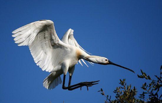 la-mitad-de-especies-de-aves-que-habitan-andalucia-son-migratorias-2