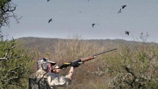 durante-45-dias-se-podran-cazar-perdices-anades-palomas-y-faisanes