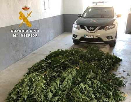 guardia-civil-desmantela-plantacion-de-marihuana-espiel-investiga-persona