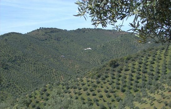 consejeria-agricultura-inicia-manana-pago-850-millones-adelanto-la-pac