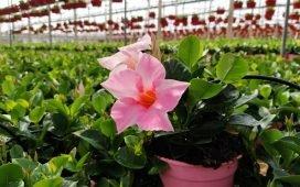 junta-abre-plazo-ayudas-destruccion-flores-plantas-ornamentales-coronavirus