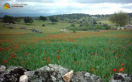 junta-destina-1-millon-euros-fomentar-el-desarrollo-rural-los-pedroches