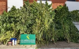 dos-detenidos-una-plantacion-de-marihuana-desmantelada-espiel