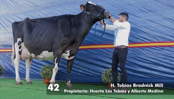 vaca-huerta-los-tobias-dos-torres-gran-campeona-segundo-ano