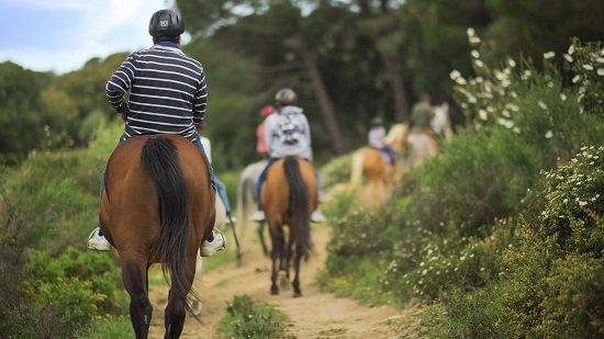 descubre-andalucia-a-lomos-del-mejor-caballo-pura-raza
