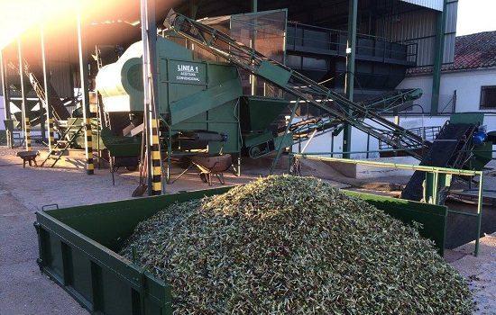 mas-136000-toneladas-de-aceite-oliva-provincia-cordoba-primer-trimestre-campana