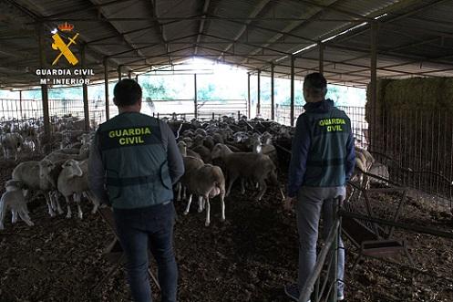 detenidas-cuatro-personas-por-robo-de-ganado-hinojosa-estafa-pedroche