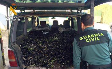 intervenidas-9-toneladas-de-aceitunas-robadas