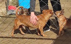 las-asociaciones-protectoras-de-animales-pozoblanco-y-dos-torres-reciben-ayudas-diputacion